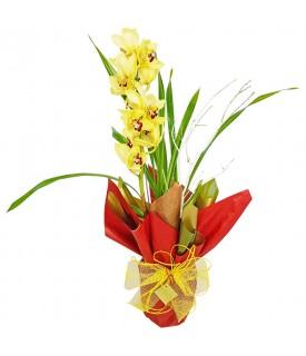 Sensação de paz - Orquídea...