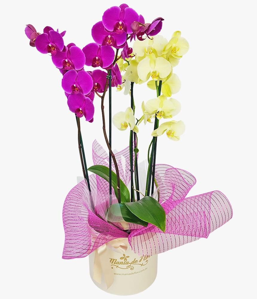 Arranjo com Orquídeas plantadas É Muito amor!