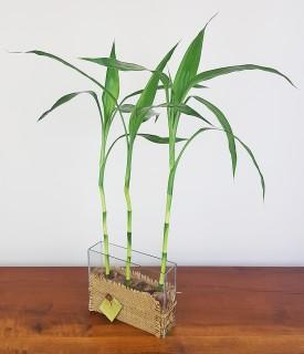 Jardim de Bambu da Sorte