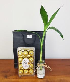 Bambu com chocolate para desejar Boa Sorte