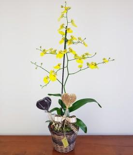 Orquídea Amarela com Chocolates - Corações dourados