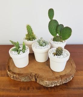 Coleção fofa de Cactus