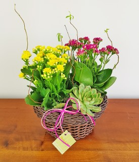 Flores e suculenta Coisa Linda