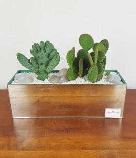 Dupla de cactus em peça de...