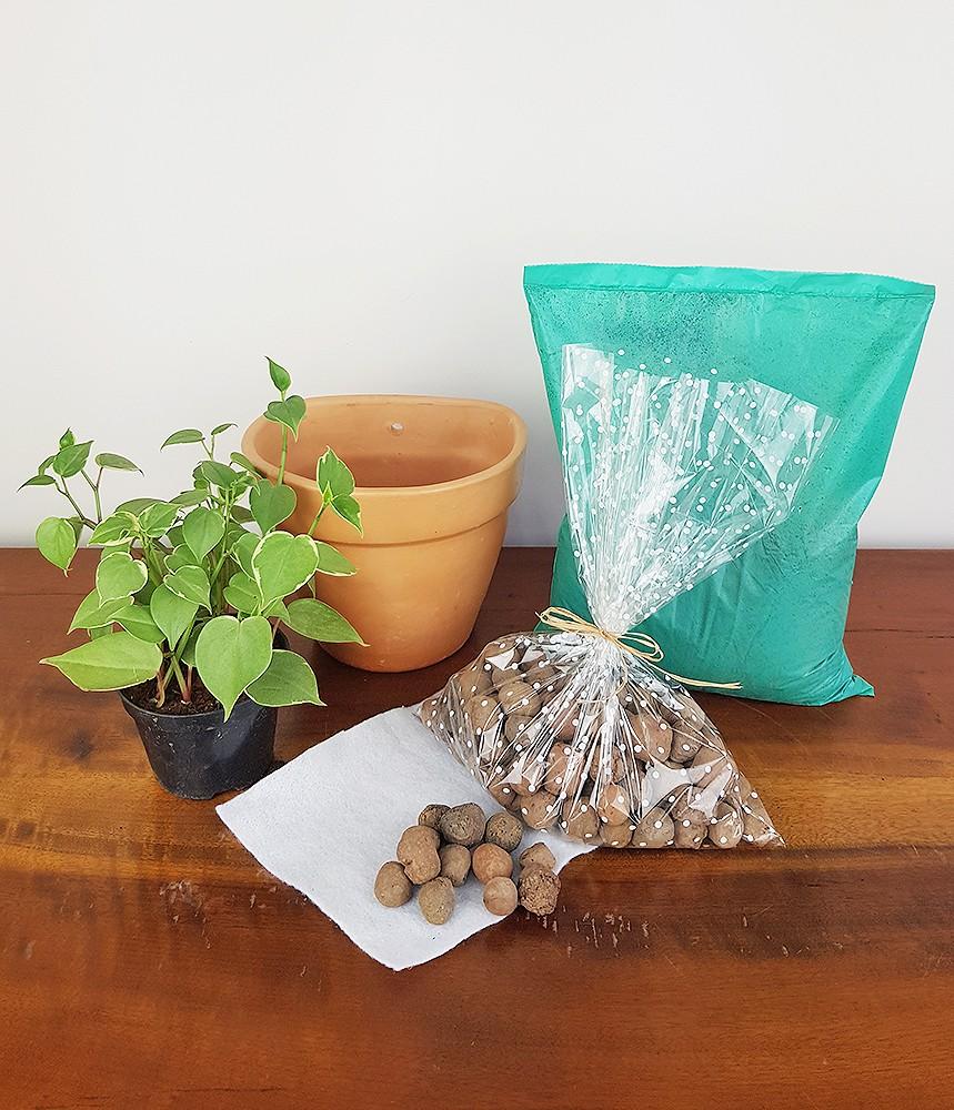 Peperômia pendente Para você plantar