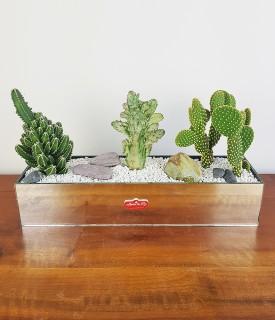 Trio de cactus para decorar