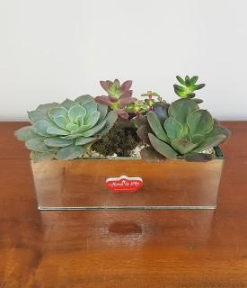 Floreira de Suculentas para decorar