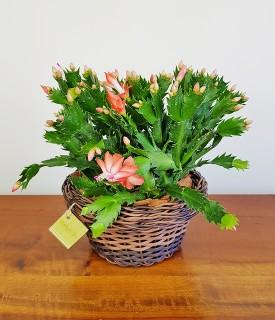 Flor de Maio para decorar