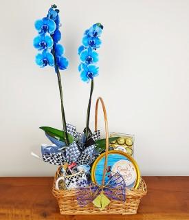 Cesta de café, chocolates e Orquídea azul