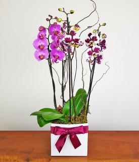 Box com Orquídeas Contém Amor