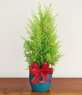 Pinheirinho de Natal para decorar