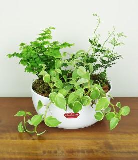 Bowl com folhagens para decorar