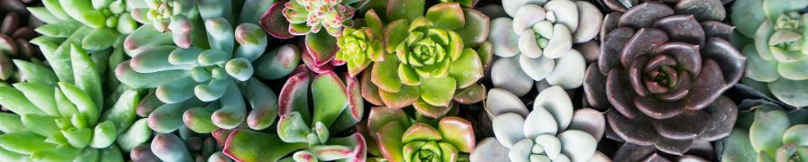 Coleção Cactus e Suculentas | Mania de Flor