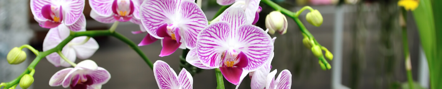 Coleção Orquídeas | Mania de Flor