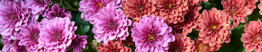 Coleção Flor do Campo | Mania de Flor