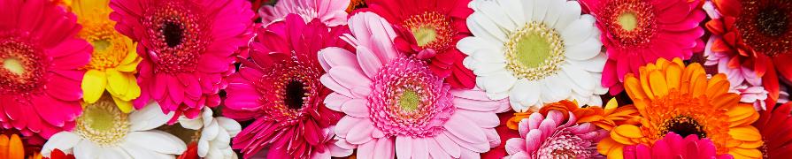 Coleção Gérbera | Mania de Flor
