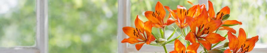Coleção Lírio | Mania de Flor