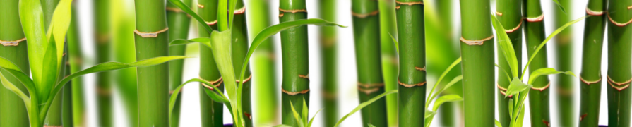 Coleção Bambu da Sorte | Mania de Flor