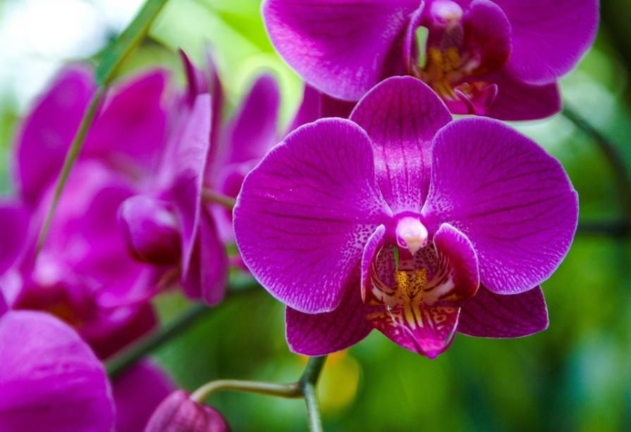 Como cuidar das suas orquídeas
